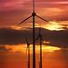 Wind farm sunset by floyduk