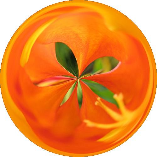 Orange Flower Circle