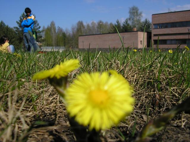 Primavera en Finlandia