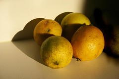 citrus, lemon, yellow, yuzu, produce, fruit, food,