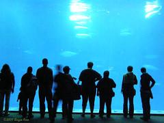 2007-Monterey Bay Aquarium