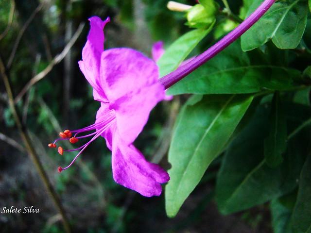 Boa Noite De Flores: Flickr - Photo Sharing