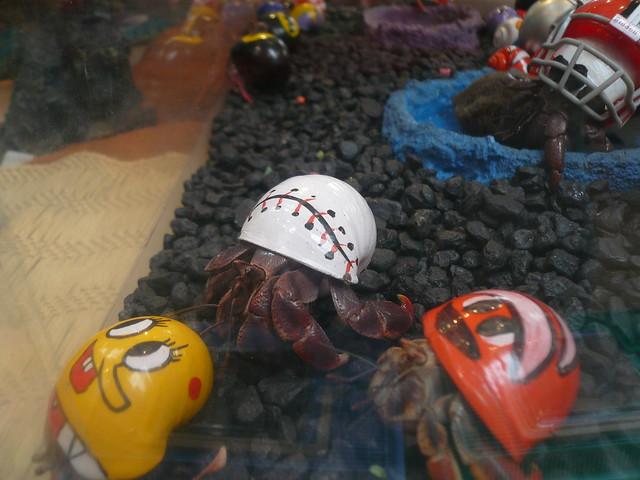 hermit crabs flickr photo sharing
