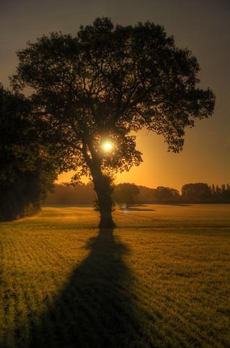 uk winter sun tree sunrise 50mm nikon frost didcot