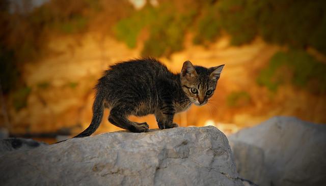 Gatto sulla scogliera