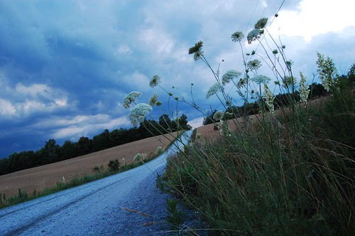 road flowers storm flower oneaday rain clouds landscape nikon rocks photoaday thunderstorm thunder pictureaday takeabow d40