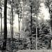 Oefter Wald #3