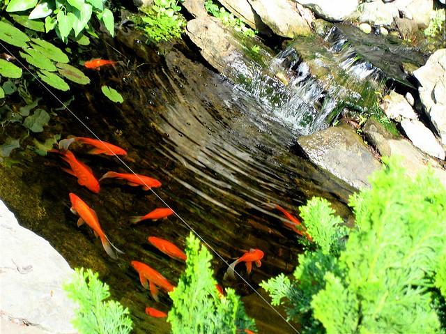 Small fish big pond flickr photo sharing for Big fish pond