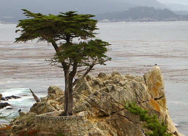 <b>The Lone Cypress</b>, <b>Monterey</b> | Flickr - Photo Sharing!
