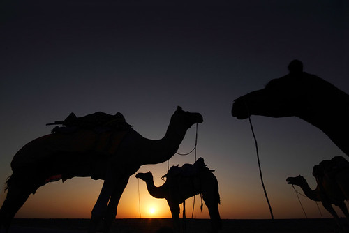 morning sky orange sun india black silhouette yellow standing sunrise desert wide 7d gradation camels rajasthan