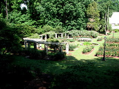Rose Garden, Raleigh NC 6708