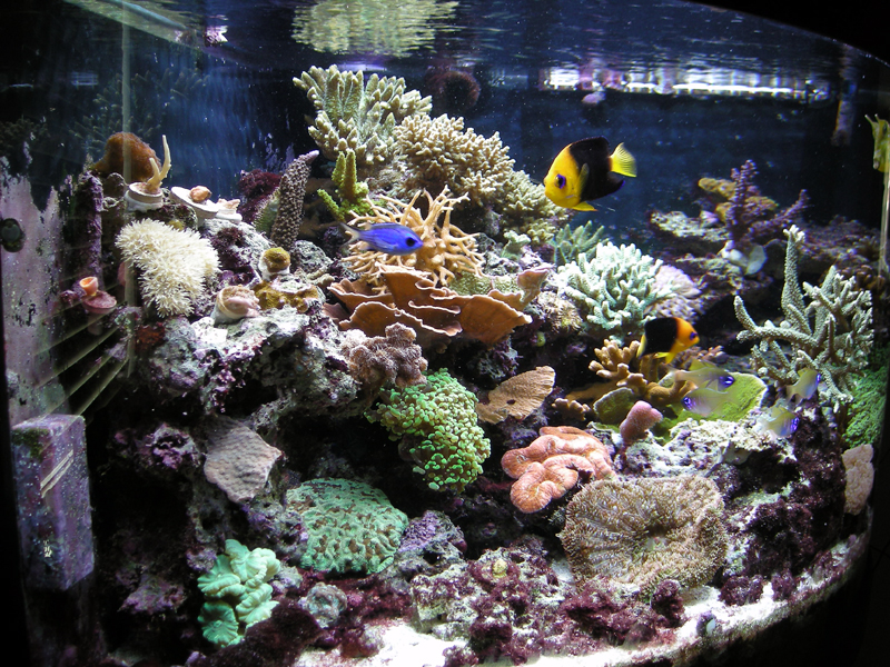 What 39 s your most expensive fish in your tank general for Most expensive saltwater fish