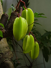 The Wonders of Star Fruit