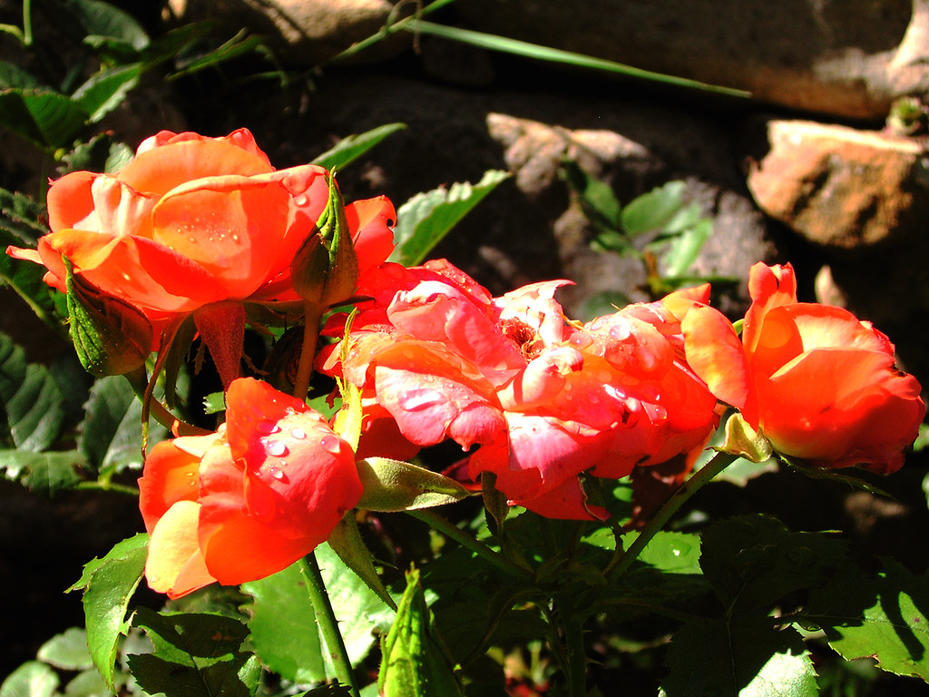 garden 191