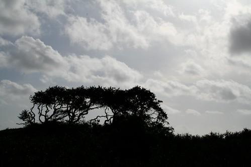 trees sky silhouette landscape