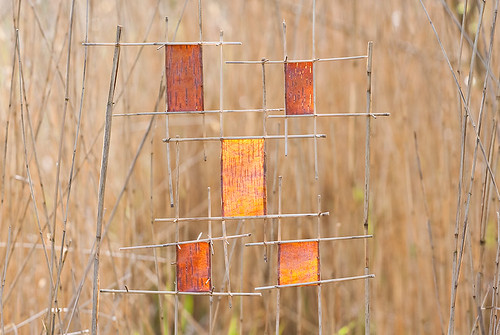 Birch Bark Squares in the Reeds