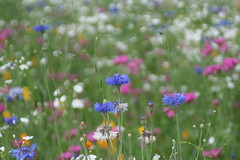 Spring flowers, 봄에 핀 꽃들