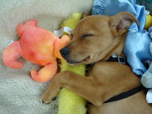 Sleeping puppy by daisygiraffe