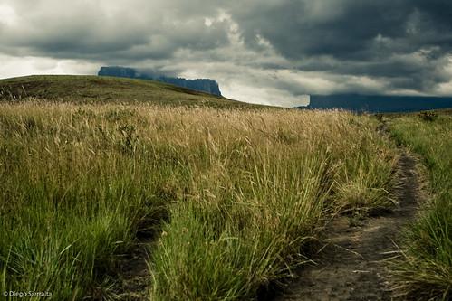 storm grass clouds landscape hiking venezuela paisaje trail pasto nubes tormenta soe tepui tepuy kukenan lagransabana estadobolivar parquenacionalcanaima cvt40 naturewatcher matawi roraimatrek