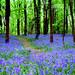 BLUE HEAVEN.  (EXPLORE)#299 by Edward Dullard Photography. Kilkenny, Ireland.
