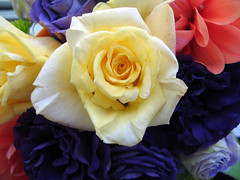 Yellow rose in my bouquet