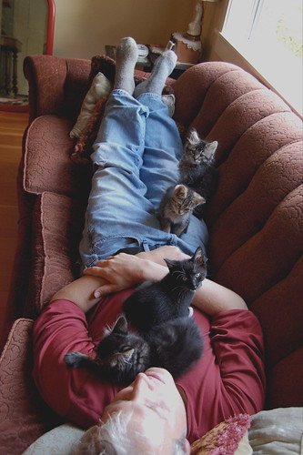 craig and kitties