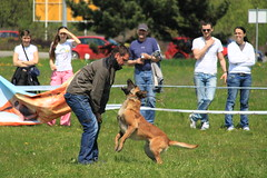 dog walking(0.0), conformation show(0.0), schutzhund(0.0), animal(1.0), dog(1.0), pet(1.0), mammal(1.0), police dog(1.0),
