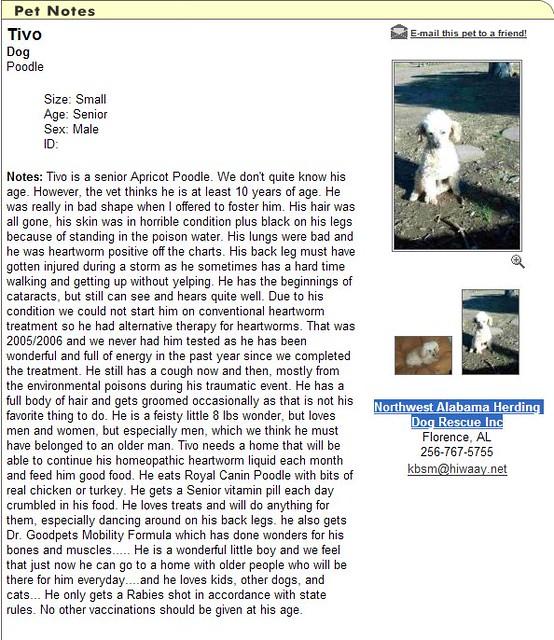 Image1 | www petfinder com/pet cgi?action=2&pet=8283944 Tivo