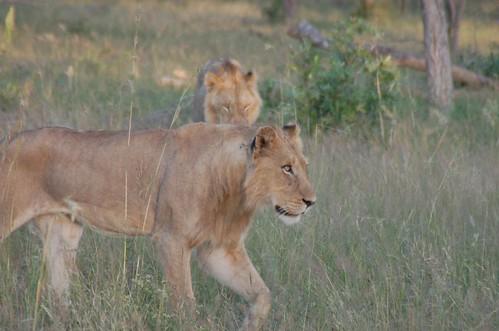AHI Treasures of Southern Africa 3-07 1629 N