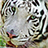 the White Tigers group icon