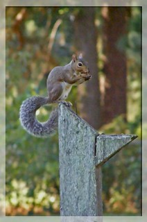 ~ squirrel ~