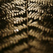 Ferns - Photo (c) Garuna bor-bor, some rights reserved (CC BY-SA)