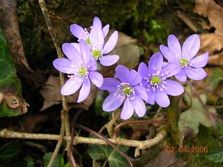 Primavara in Gradina Botanica Cluj-Napoca