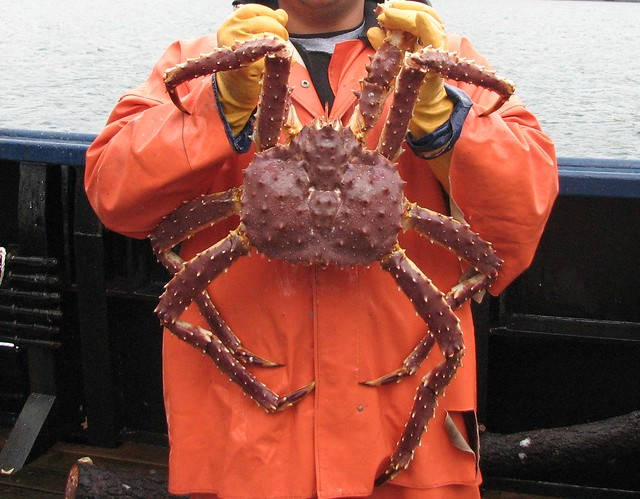 King Crab Images Red King Crab