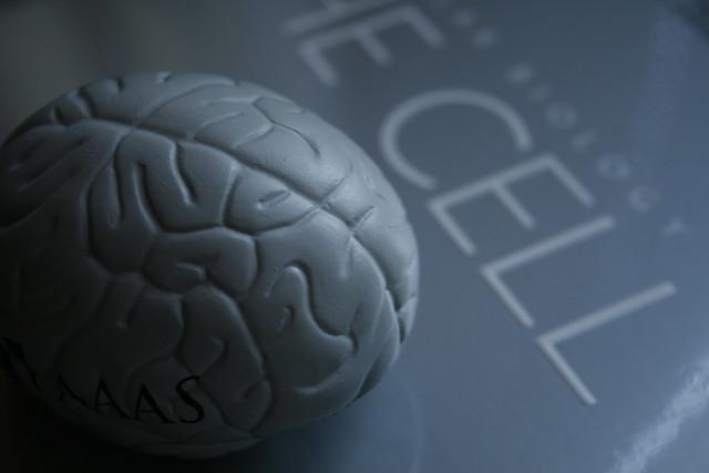 Brain cell(s) - 無料写真検索fotoq