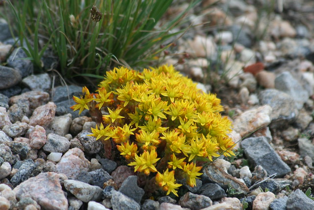 Tundra plants | Flickr - Photo Sharing!