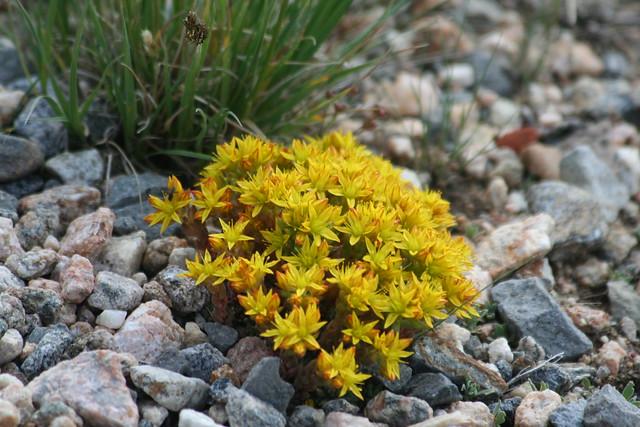 Tundra plants | Flickr - Photo - 149.7KB