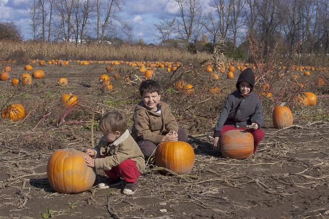 Pumpkin picking 2010