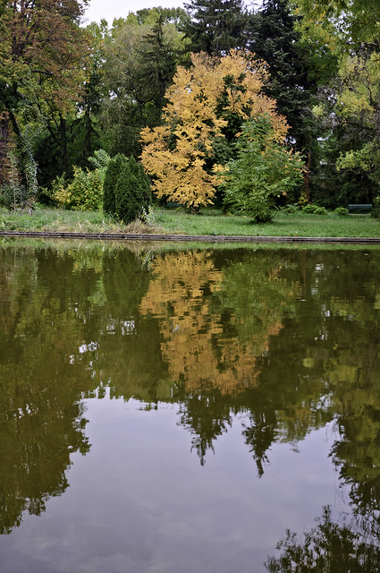 Bright orange tree reflected into lake