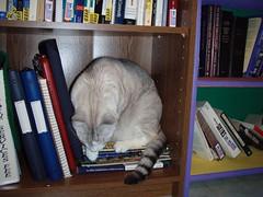 Diego in the bookshelf