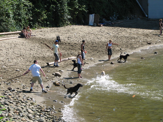 Dog Beach in Vancouver