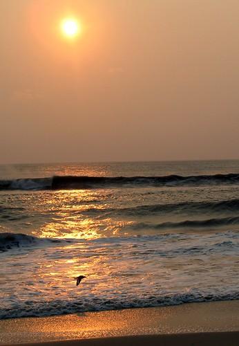 sea sun bird sunrise gold solitude northcarolina outerbanks naturesfinest peaisland naturesgallery impressedbeauty aplusphoto