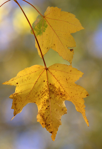 Have an excellent Fall Break. Photo courtesy of Rob Kleine via Flickr Commons