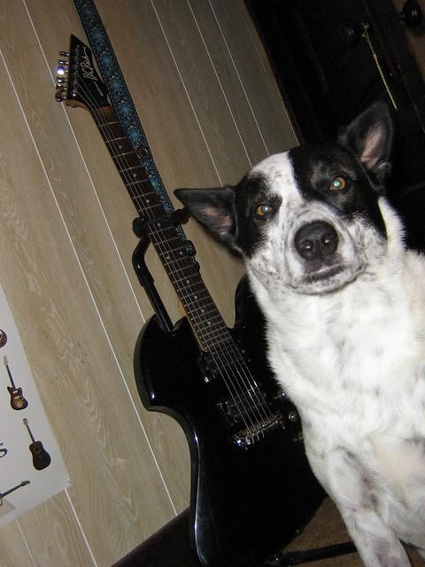 Dog Wiggles Ears To Music