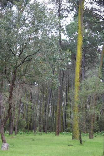 Tuart Forest