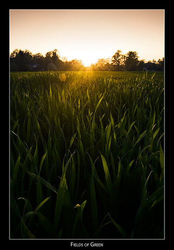 sunset sun field cornfield