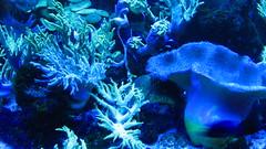 coral reef fish(0.0), coral reef(1.0), coral(1.0), organism(1.0), marine biology(1.0), invertebrate(1.0), marine invertebrates(1.0), aquarium lighting(1.0), underwater(1.0), reef(1.0), sea anemone(1.0),