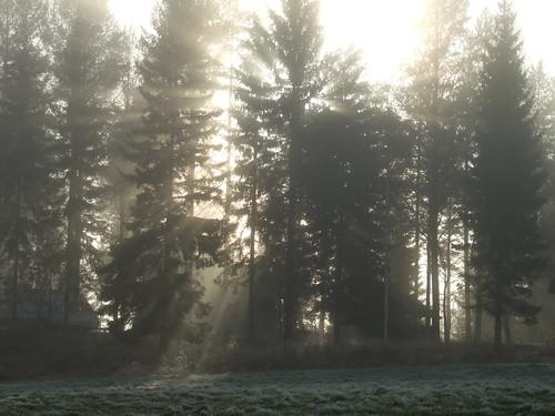 sun mist fog forest woods ray lawn isokirja