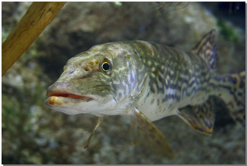 ���,yil�kjychz`&�i-9`�_il pesce - kala