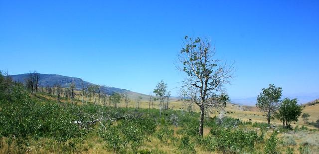 Organic Ranch2